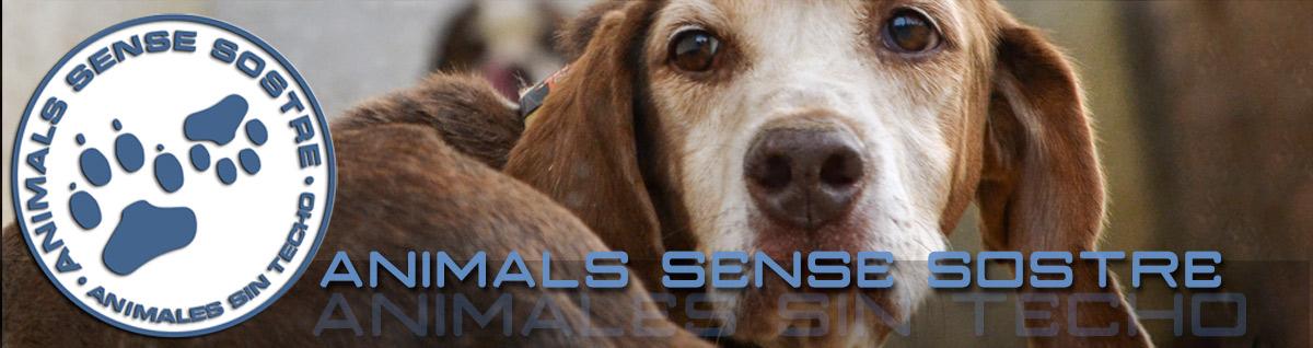 Animals Sense Sostre