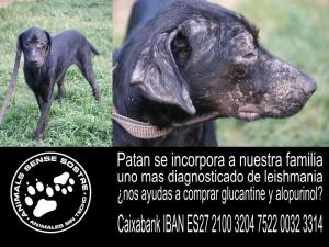 Patan  encontrado y diagnosticado de Leishmania.