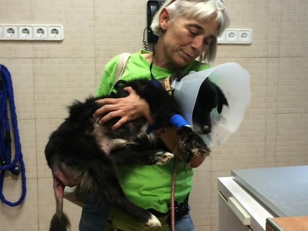 Animals sense sostre donativos for Oficina 2100 caixabank
